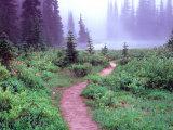 Path to Reflection Lake  Mt Rainier National Park  Washington  USA