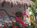 Bougenvilla Blooms Underneath a Thatch Roof  Puerto Vallarta  Mexico