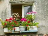 Window in Old Town  Istria  Croatia