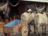 Ox Cart in Artesan Town of Sarchi  Costa Rica