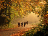Walkers Among Trees in Autumn Foliage  Seattle  USA