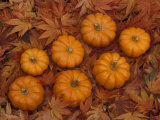 Pumpkins with Maple Leaves in Autumn  Washington  USA