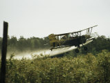 A Crop Dusting Airplane Flys Low Over a Field to Drop Pesticide