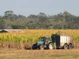 Harvesting Sugarcane near Hervey Bay  Queensland  Australia