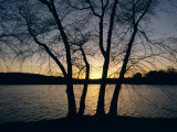 Trees Alongside Jamaica Pond Silhouetted by the Setting Sun