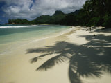 Palm Tree Shadows on a Beach with Gentle Surf and Mountain Backdrop