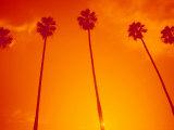 Row of Palm Trees  Santa Monica  CA