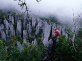 Person Taking Photograph in the Limestone Forest  Gunung Mulu National Park  Malaysia