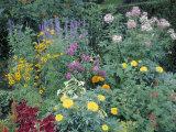 Various Species of Flowers in Garden
