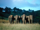 Four Elephants in Periyar Sanctuary of Kerala  Kerala  India