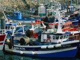 Fishing Boats Docked in the Harbour  La Turballe  Pays De La Loire  France