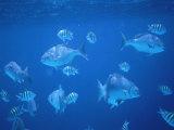 Tropical Fish  Caribbean