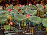 Plants and Flowers along Yellow River  Kakadu National Park  Australia