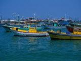 Colorful Fishing Boats  Alexandria  Egypt