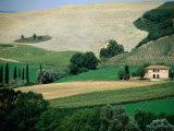 Tuscan Landscape Near San Gimignano  San Gimignano  Tuscany  Italy