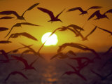 Sunset and Seagulls on Green Key  Port Richey