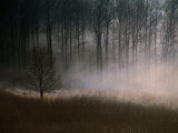 Forest Mist in Rural North West Sjaelland  Sjaelland Island  West Zealand  Denmark