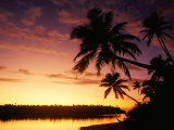 Coconut Palms Over Aitutaki Lagoon  Aitutaki  Southern Group  Cook Islands