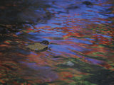 Autumn Leaves and Rainy Wet Pavement Reflect Neon Signs in Abstract