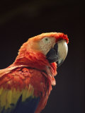 A Close View of a Macaw