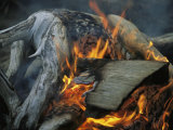 Driftwood Campfire  Clayoquot Sound  Vancouver Island
