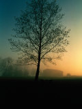 Misty Twilight View of a Silhouetted Tree
