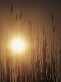 View of the Setting Sun Behind Tall Grasses