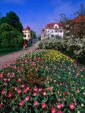 Spring Flowers in Angelholm City Park  Angelholm  Skane  Sweden