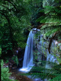 Russell Falls with Ferns in Foreground  Mt Field National Park  Australia