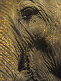 Close-up of Elephant  Thailand