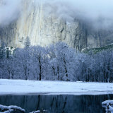 Mercad River and Snow-Covered Black Oak Trees in Front of El Capitan  Yosemite National Park