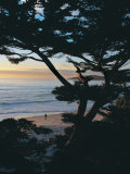 Sunset on Beach with Trees  CA