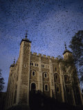 A Flock of Starlings in Flight over the Tower of Londons White Tower