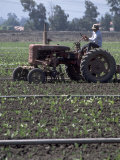 Farmer Sitting on Tractor