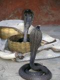 Snake Charming  Oris  India