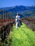 Equestrian Riding in a Vineyard  Napa Valley Wine Country  California  USA