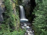 Waterfall and Lush Foliage  Mt Rainier National Park  Washington  USA
