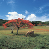 Field with Flowering Trees and a Horse with Blue Sky