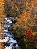 Mountain Stream in Autumn  Vindelfjallen Nature Reserve  Sweden