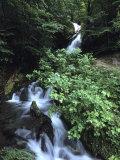 Patagonian Waterfall  Cascada La Macarena  Tierra Del Fuego National Park  Near Ushuaia  Argentina