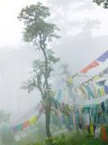 Praying Flags in the Dochula Pass  Between Wangdi and Thimphu  Bhutan