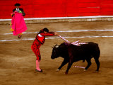 Bullfights Begin with Bleeding of the Bull  San Luis Potosi  Mexico