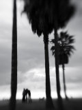 Venice Beach  Venice  Los Angeles  California  USA