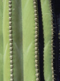 A Close  Detailed View of a Cactus