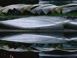 Rental Canoes Rest Beside the Suwanee Canal