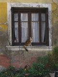 A Cat Sitting on an Exterior Window Sill in Tournus Papier Photo par Todd Gipstein