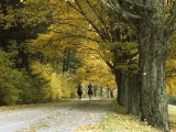 Autumn View of Horseback Riders on a Tree-Lined Lane