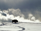 An American Bison Covered in a Coat of Snow