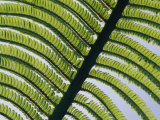 A Close View of a Fern