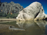 A Johnstons Crocodile at the Waters Edge